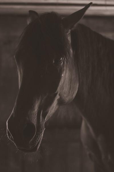 Chapman Farm_Maine_2014-5936