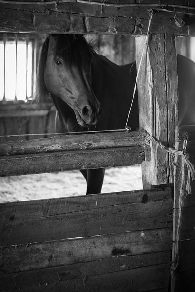 Chapman Farm_Maine_2014-5961