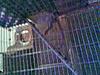 little boy hanging down lower