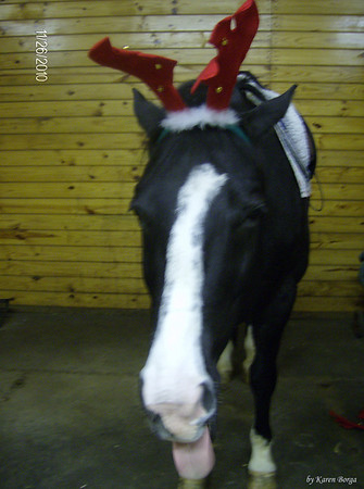 Dickens getting bored wearing antlers and sticking his tongue out