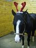 Dickens wearing antlers