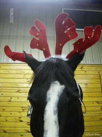Closeup Dickens wearing two sets of antlers
