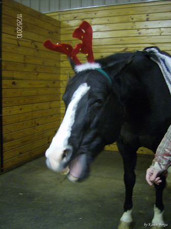 Dickens getting bored wearing antlers and yawning