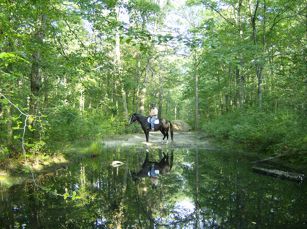 Mr. Dickens, Keith Riding, visits a vernal pond in the ...