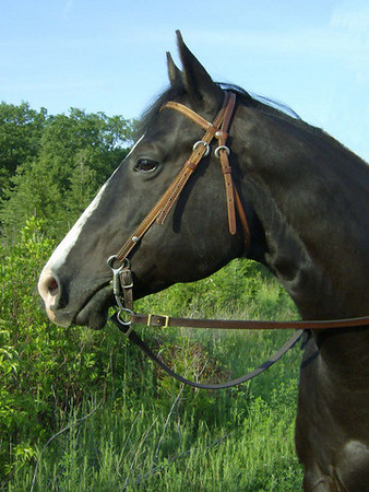 Customized Dickens, Black Quarter Horse, June 7, 2009