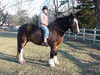 Trixy, an American Shire Mare <br /> Keith riding!<br /> photo 12/25/2009