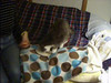 Snoop, elderly grey and white cat, asked to be first.<br /> :-)<br /> At 1:20 of this 2:22 minute clip, I notice Silvester wants to join in, walking up along the back of the couch.<br /> This is big for Silvester to come so close as Snoop and Silvester are not best friends.<br /> Snoop usually chases away Silvester.