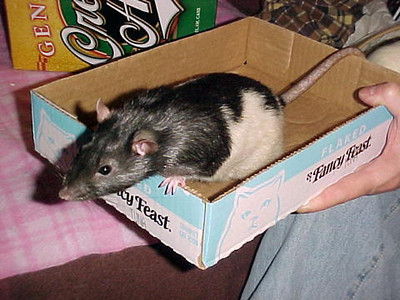 Tennie in the travel box