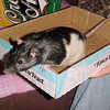 Tennie in the travel box