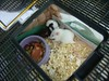 Baby rats are so so cute. Wanda and Tony, their rescue rat family, Colebrook CT rescue effort