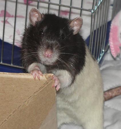 Number rat 34?
