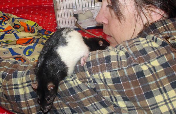 Pet rat Number 38 on Karen's arm during intros.