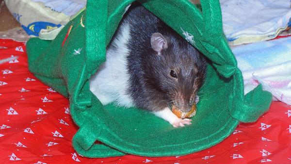 Yummy hazelnut in a holiday bag.