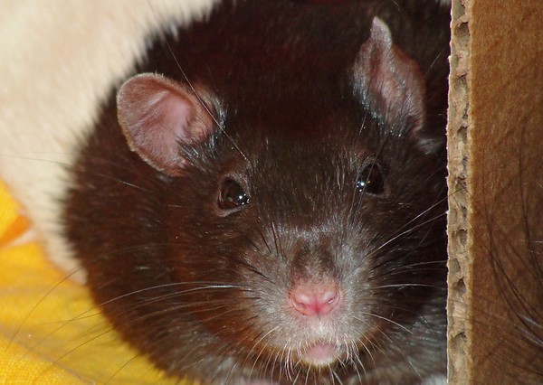 Jerry close up. cute face, whiskers and nose.