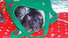 Sweet rats in a holiday bag.