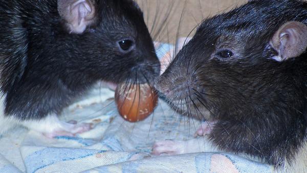 yummy, hazelnuts!
