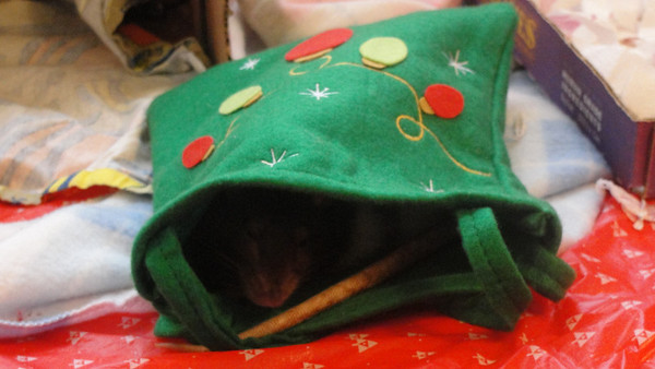 Sweet rat in a holiday bag.