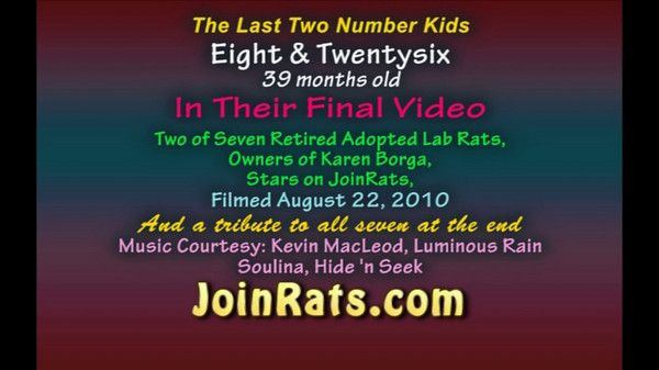 This video shows Numbers 8 and 26 as best buddies.<br /> The fast forward, group film is of Numbers 7, 8, 11, 26, 34, 38 and Jerry.<br /> Number Ten had died three months earlier.<br /> The Number rats were retired from a lab after being used in behavioral experiments.<br /> Jerry is a retired lab who was not used in any experiments.