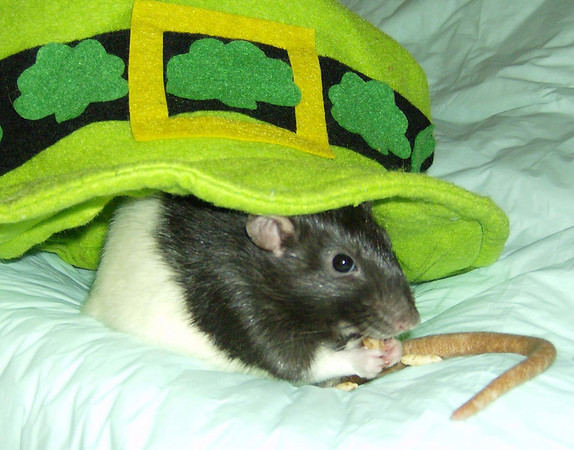 Saint Patrick's Day, 2009 Sweet Number Rat