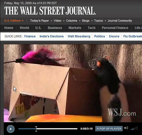 Wall Street Journal - Pet Rats are stars to the entire world. Karen Borga's Number Kids enjoy fame in Amber Alliger's video interview about adopted lab rats.