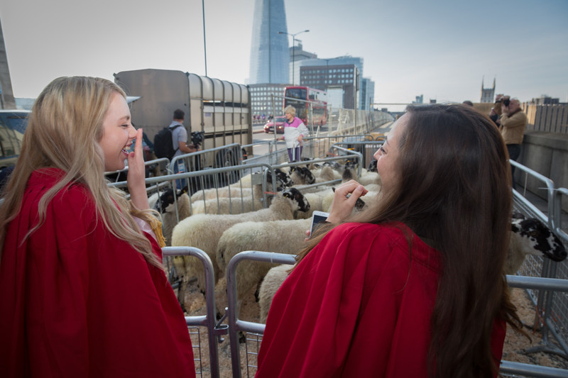 London Bridge sheep drive