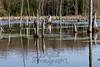 03-17-2012-Konu_Swamp-2999