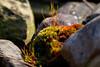 03-17-2012-Konu_Swamp-3020