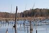 03-17-2012-Konu_Swamp-2983