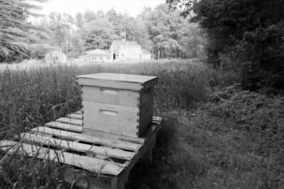 An eerily quiet beehive.