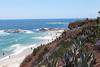 Laguna Beach 1(s)