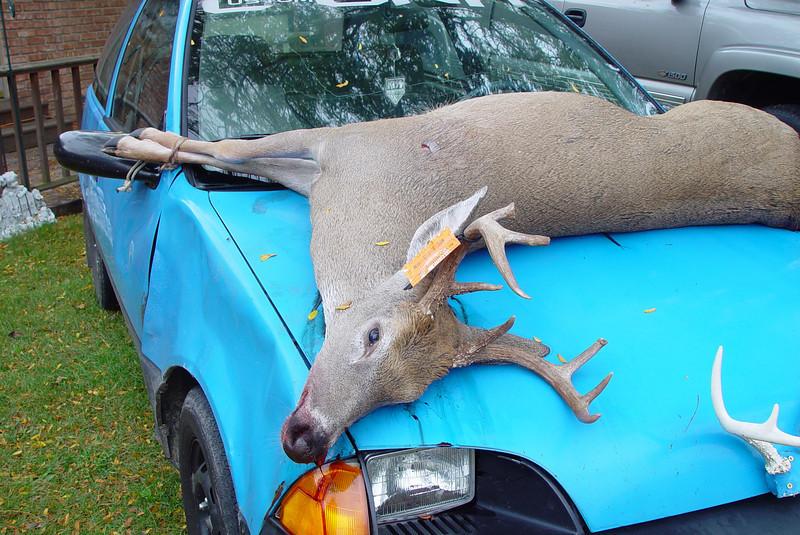 My neighbor shot this buck Friday.