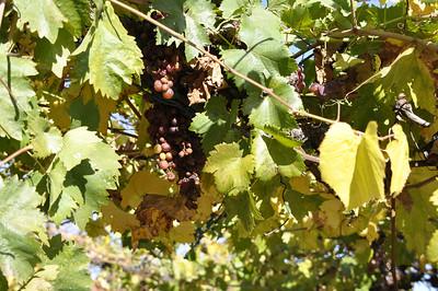 Life in Wine-derful 11-23-13