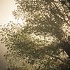 Live Oak '14_053