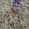Purple Lupine and Pink Sand Mat