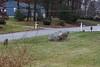 IMG_6934 Deer 12-11-2104
