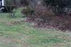 IMG_6948 Deer 12-11-2104