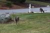 IMG_6935 Deer 12-11-2104