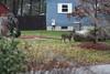 IMG_6924 Deer 12-11-2104