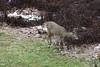 IMG_6945 Deer 12-11-2104