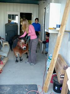 Maura leading the miniature horses