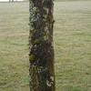 I do like a nice lichen.