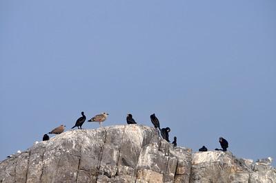 BIRDS_0468
