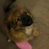 Maridons Puppy :