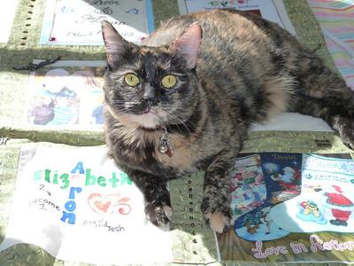 Mary Pat's cat