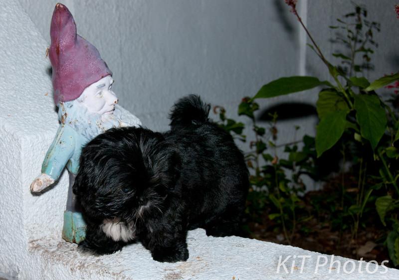 Gnome meet GPuppy<br /> D303250