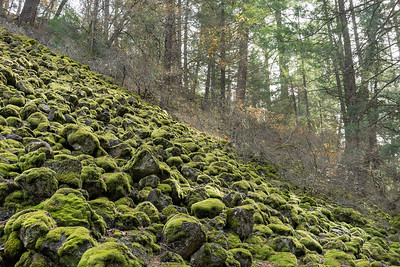 Mossy rocks, Burney Falls trail.