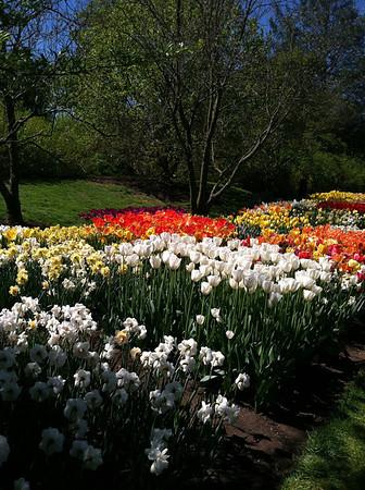 Mon at Longwood Gardens