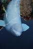 Mystic Aquarium - 20150307 - 0092