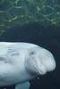 Mystic Aquarium - 20150307 - 0083