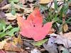 pretty fall leaf
